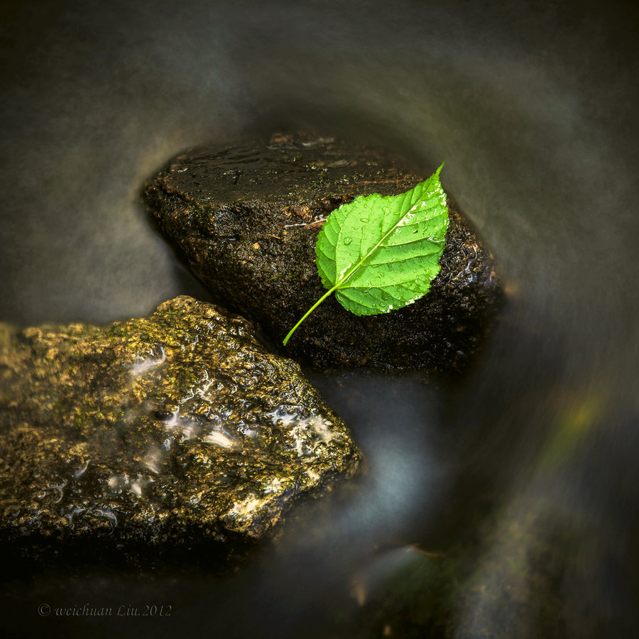 zen_silent_leaf_know_by_lwc71-d50b8rw